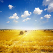 Field at harvest with crop cut and pressed in sunset — Stock Photo