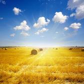 Terrain à la récolte avec une culture couper et pressé au coucher du soleil — Photo