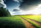 Country road to forest and sun — Stock Photo
