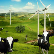 Foto Stock: Cows graze in front of wind turbines