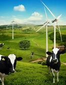 Krávy se pasou před větrné turbíny — Stock fotografie