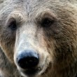 The face of a bear — Stock Photo