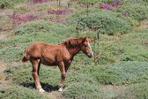 Photograph of a young horse grazing in the meadow — 图库照片
