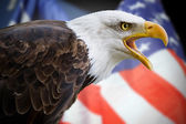 A beautiful bald eagle with a background of a usa flag — Stock Photo