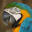 Portrait of a cute and colored parrot — Stock Photo