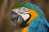 Portrait d'un perroquet mignon et coloré — Photo