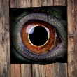 Stock Photo: Mistery animal eye
