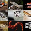 Snake collage — Stock Photo