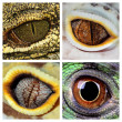 Stock Photo: Reptiles eyes