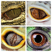 Reptiles eyes — Stock Photo