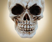 Skull and texture — Stock Photo