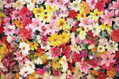 Lot of flowers — Stock Photo