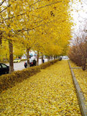 Autumn — Photo
