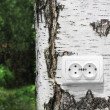 Stock Photo: Power receptacle on tree
