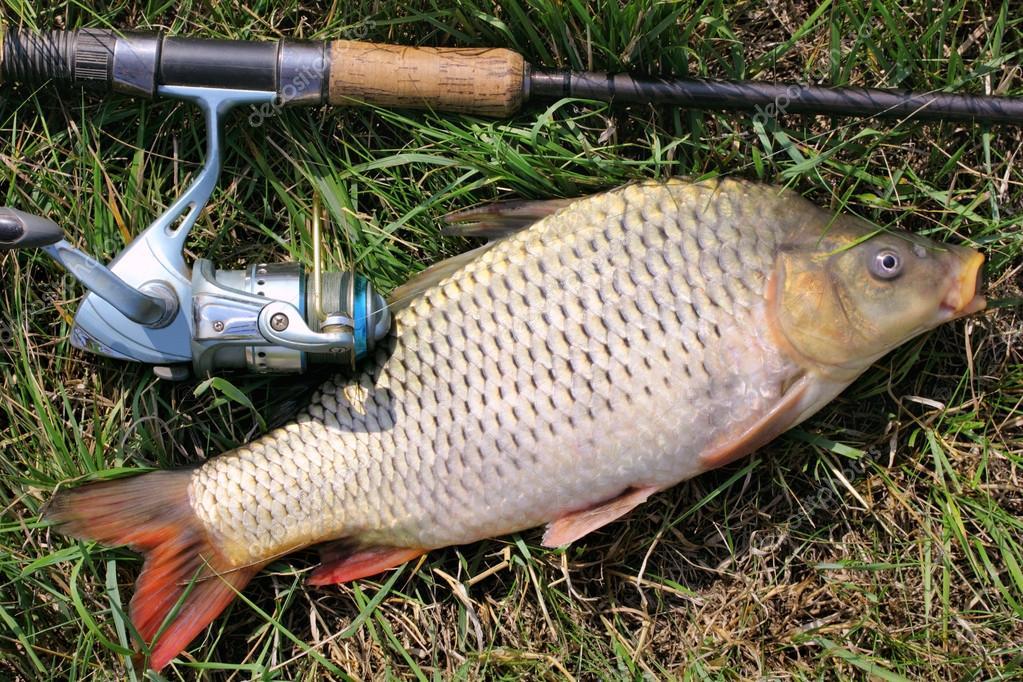 фото рыбалка карповая