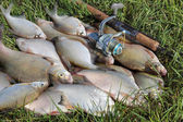 Fishing catch - bream — Stock Photo