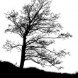 Tree silhouette isolated on white — Stock Photo