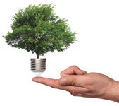 Strom, který roste ze základny žárovky — Stock fotografie