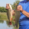 Royalty-Free Stock Photo: Carp in the hand of fisherman