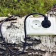 Stock Photo: Power receptacle and switchplug on tree
