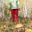 Girl collect mushroom on forest — Stock Photo
