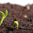 Small green seedling in the ground — Stock Photo #23583949
