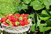 Fresh, strawberries in a basket — Stock Photo