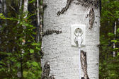 Power receptacle and switchplug on a tree — Stock Photo