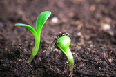 Small green seedling — Stock Photo
