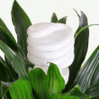Stock Photo: Energy saving light bulb on green plant