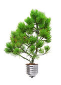 Pine growing from the base of the light bulb — Stock Photo