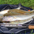 Stock Photo: Fishing catch on the grass and fishing gear