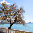 Stock Photo: Site of seaside quay with lonely tree. Gelendzhik. Russia.