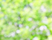 естественный зеленый фон — Стоковое фото
