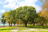 Park at the beginning of autumn — Stock Photo