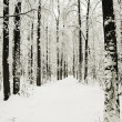 Road in winter park in snow — Stock Photo