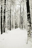 Road in winter park in snow — Stockfoto