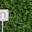 Stock Photo: Electric power receptacle on green grass background