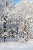 Sunlight Winter park in snow — Stock Photo