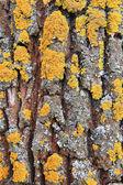榆树的树皮。无缝的花木纹理. — 图库照片