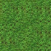Green grass seamless texture — Stock Photo