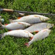 Постер, плакат: Fishing catch on the grass and fishing gear