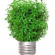 Tree growing from the base of the light bulb — Stock Photo #46675725