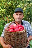 Uomo anziano, raccolta una mela — Foto Stock