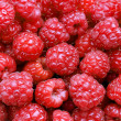 A beautiful selection of freshly picked ripe red raspberries. — Stock Photo #51052377