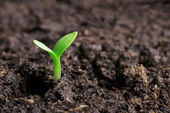 Small green seedling in the ground — Stock Photo