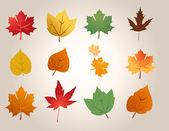 Maple leafs illustration vector — Stock Photo