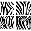 Set of Vector zebra texture Black and White - Stock Photo