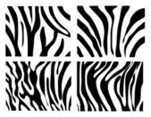 Set of Vector zebra texture Black and White — Stock Photo