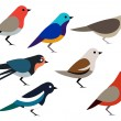 Set of different birds — Stock Photo